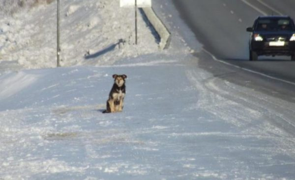 Resultado de imagen de Truck drivers save a dog from starvation